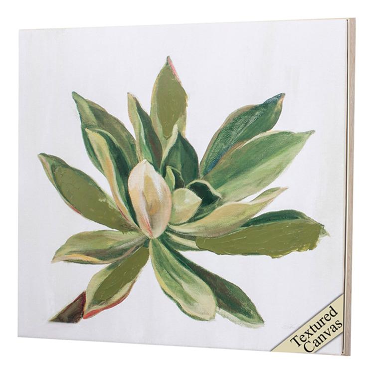 Cuadro Succulents I
