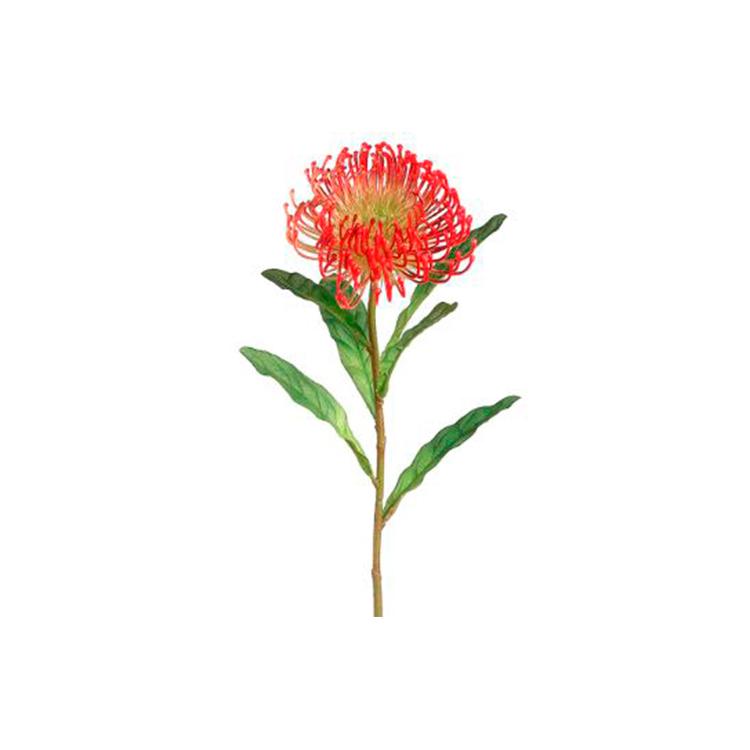 Vara Protea