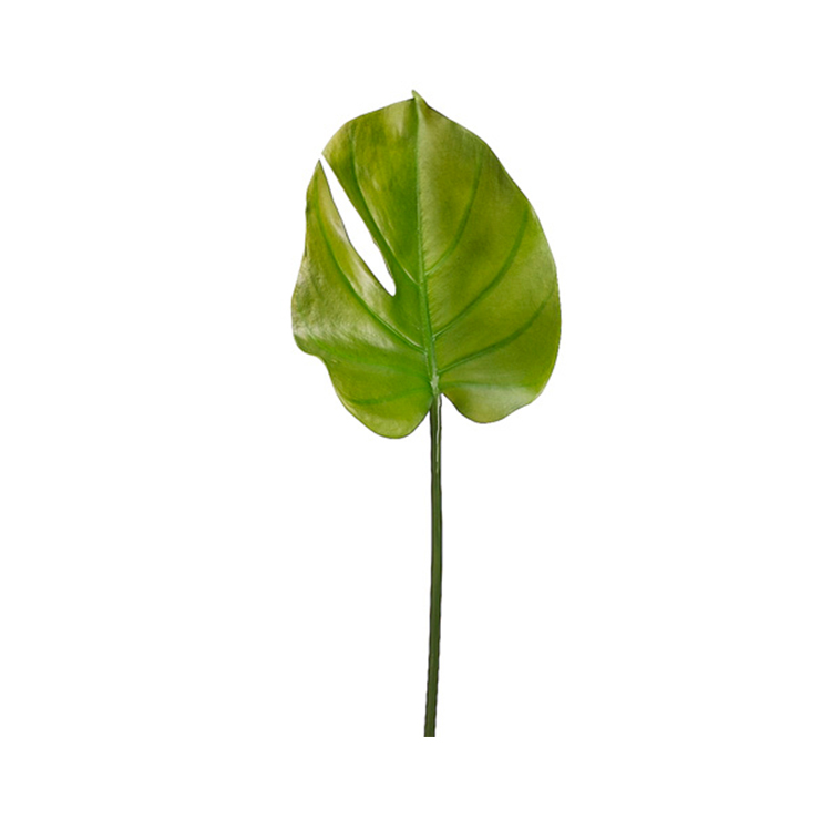 Vara Hoja verde