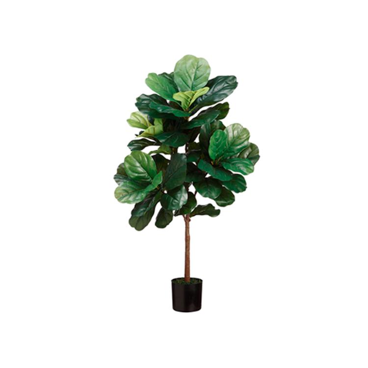 Planta Higo